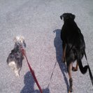 Trip N Trot, LLC Doggie Walking and Pet Sitting