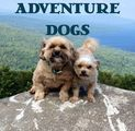 Adventure Dogs