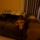 Photo from Hector S. for pet job in Knoxville